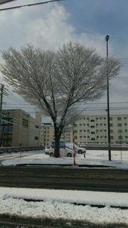 雪の華.jpg