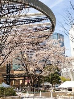 29.4桜のたより♪①.jpg