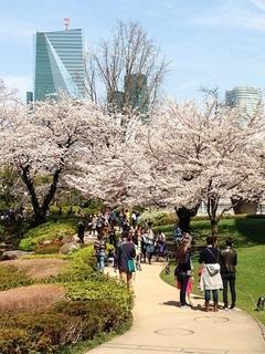 29.4桜のたより♪③.jpg